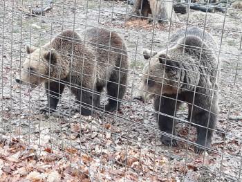 Libearty Bear Sanctuary